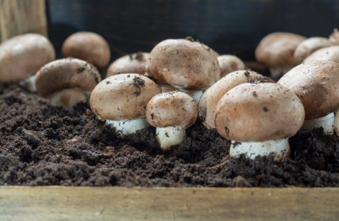How to: coltivare i funghi in casa