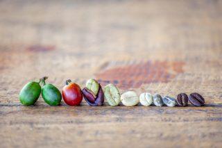 Caffè: il percorso dalla piantagione alla vostra tazzina