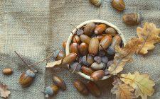 Dal bosco alla tavola: usare le ghiande