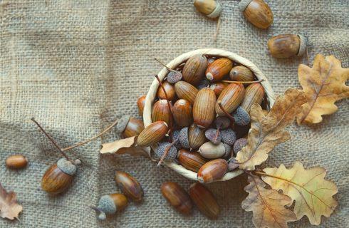 Dal bosco alla tavola: il potere della farina di ghiande