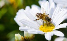 27 cibi che scomparirebbero senza le api