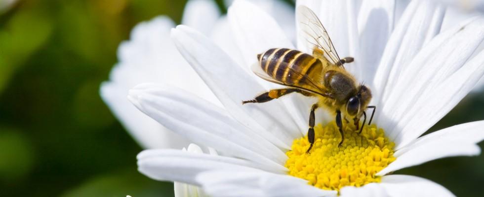 Tradotto per voi: 27 cibi che potremmo perdere se le api si estinguessero