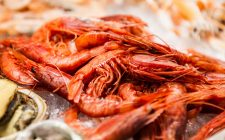 Mangiare pesce a Firenze? Ecco dove