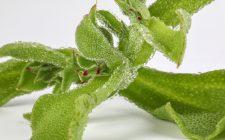 Crippa riporta in vita le erbe dimenticate