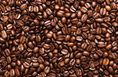 Non solo Arabica: 5 specie di caffè da conoscere