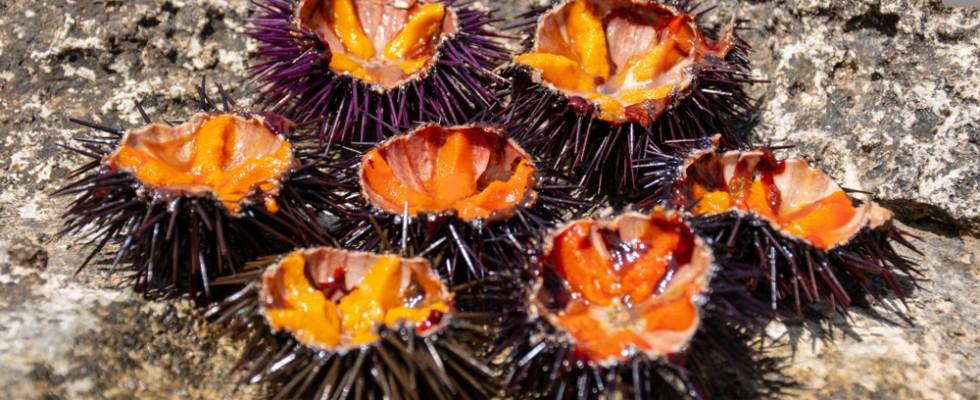 I ricci di mare finti per scongiurare l'estinzione (e come farli a casa)