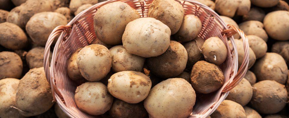How to: come conservare le patate crude e cotte