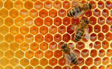 Perché dovremmo salvaguardare le api