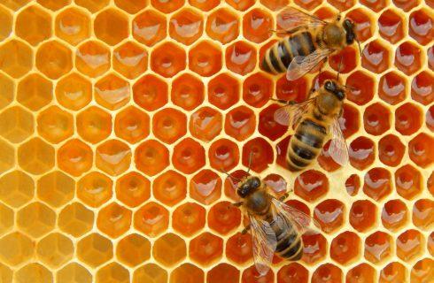 Ecosistema: perché dovremmo salvaguardare le api (e il miele)