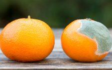 13 trucchi per conservare i cibi più a lungo