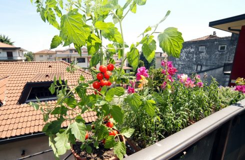 Coltivare in balcone: una guida utile