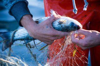 Il WWF insegna la pesca sostenibile (e gli chef cambiano menu)