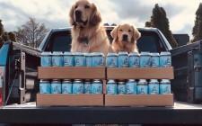 New York: il delivery lo fanno i cagnolini