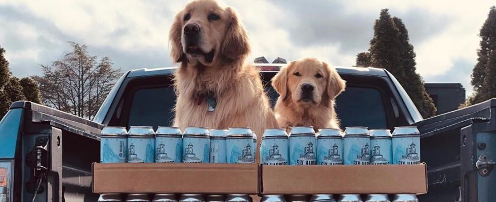 New York: il delivery di birra lo fanno i cagnolini