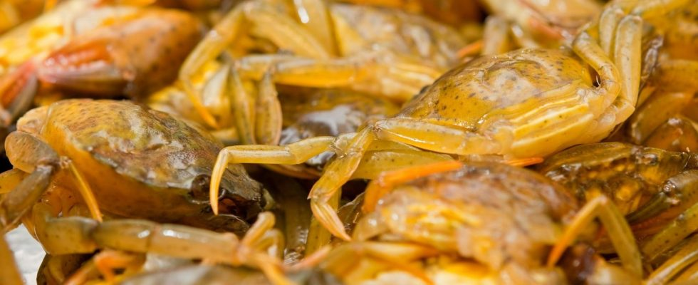 Moeche: dal Veneto un cibo da re