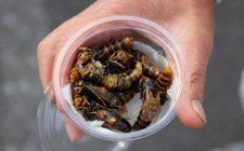 Avete mai pensato di mangiare una vespa?