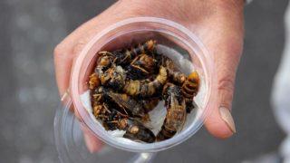 Una tradizione che si estingue: le vespe di Gifu in Giappone