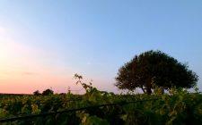 Baglio Aimone: la storia siciliana da bere