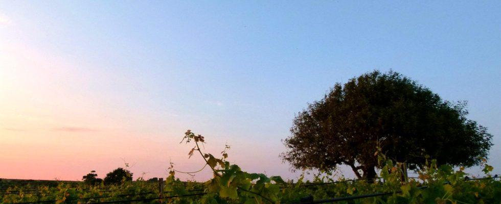 Baglio Aimone: i Pupi Siciliani in un bicchiere
