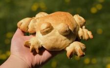 Frog bread, l'ultima idea dei cuochi social