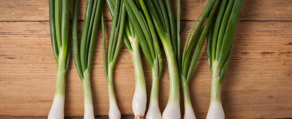 Di stagione: 10 ricette con i cipollotti da cucinare subito