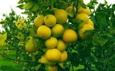 Bergafest: in Calabria si celebra l'oro verde