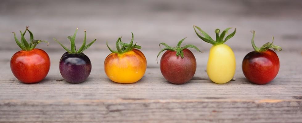 Pomodori: le 14 varietà più particolari e come usarle in cucina