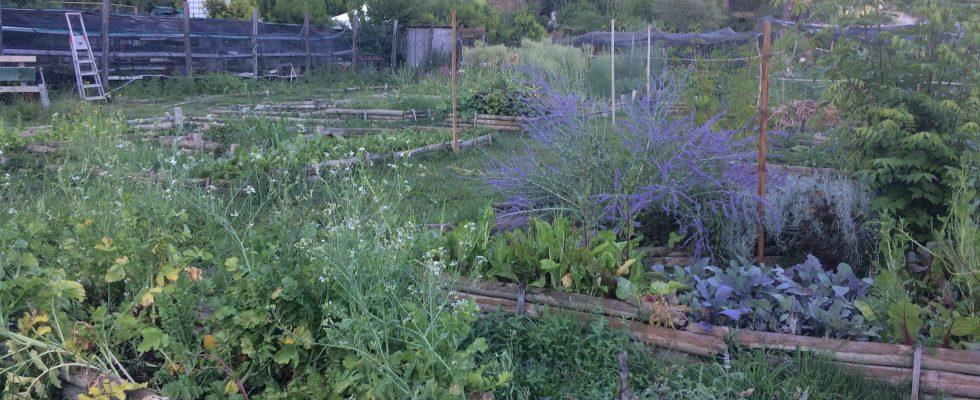 Sinergico e Bioattivo sono le nuove frontiere dell'orto