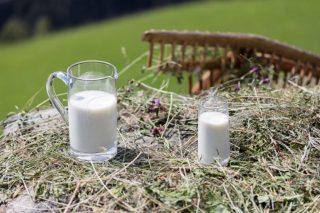 Cos'è il latte fieno e perché è così buono