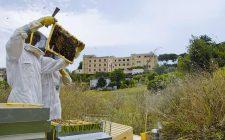 Ci hanno insegnato a fare il miele in città