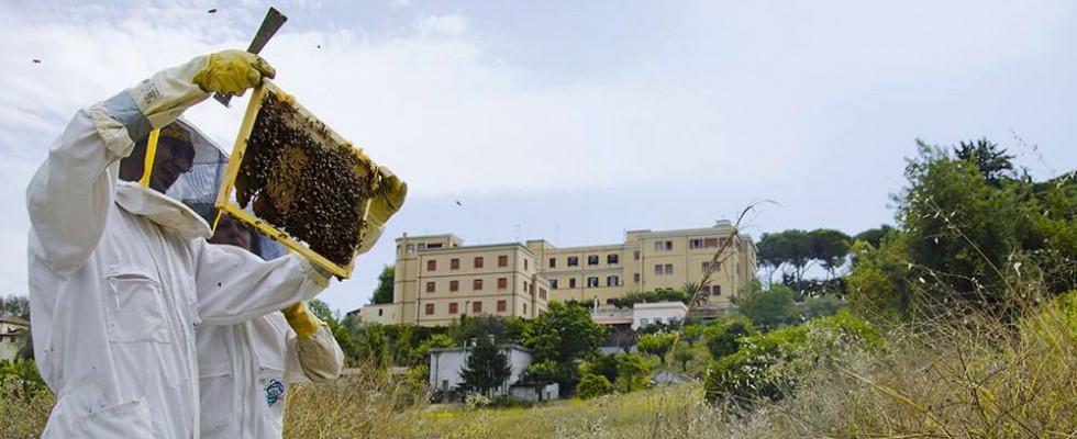 Come si fa il miele in città? Ce lo insegnano i ragazzi di Api Romane