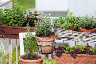Coltivare in balcone in autunno? Si può fare, ecco come