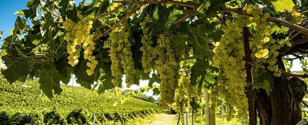 Il 2020 almeno per il vino sarà una grande annata