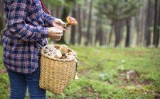 Decalogo del provetto cercatore di funghi