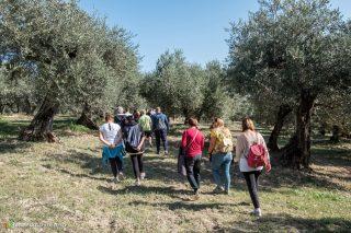 Il 25 ottobre si cammina tra gli olivi in tutta Italia
