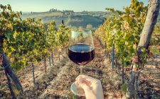8 cose che sicuramente non sapevi sul vino