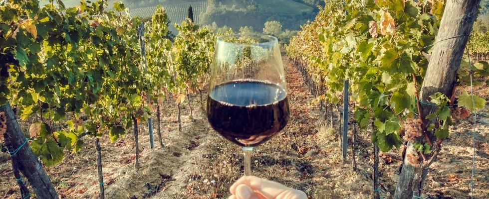 8 curiosità sulla storia del vino secondo Roberto Cipresso