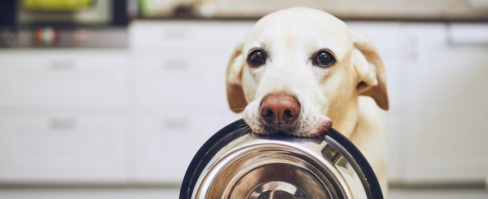 Avanzi: cosa può mangiare il mio cane?