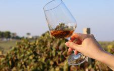Sicilia: i vini da conoscere e bere nel 2021