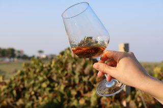 Sicilia: i vini da provare nel 2021 (prima parte)