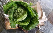 Piccola guida all'uso della verza in cucina