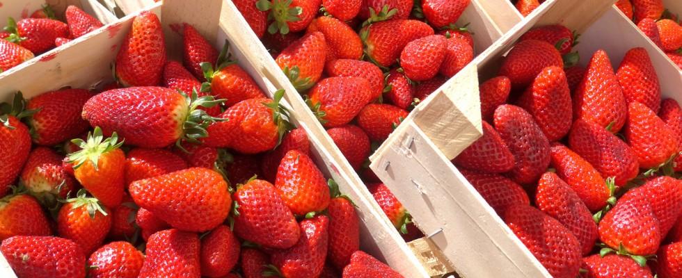 Come scegliere e conservare le fragole, ora che sono di stagione