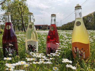 Oltre birra e vino: le bevande fermentate rinascono in Italia