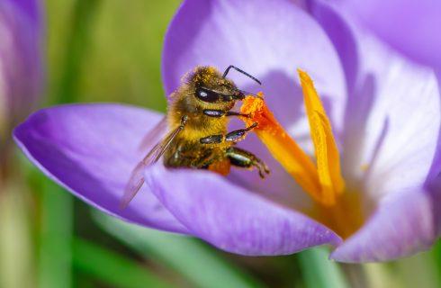 In Toscana si passeggia per salvaguardare le api