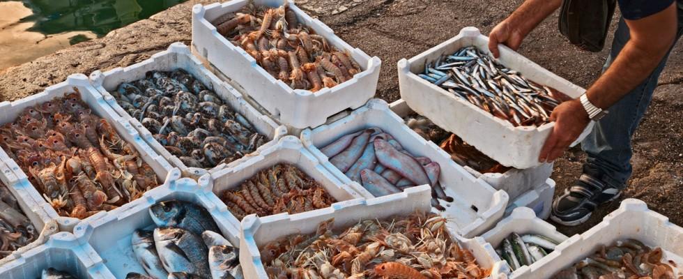 Quando è meglio non comprare il pesce? Abbiamo chiesto a Coldiretti