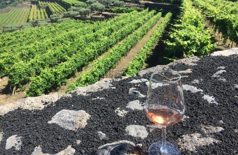 La Gelsomina: un tesoro agricolo e vinicolo ai piedi dell'Etna