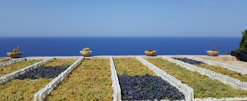 Il 20 luglio in Sicilia si celebra il Malvasia Day