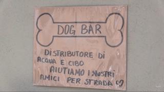 """Vibo: bar """"da cani"""", acqua e cibo ai randagi"""