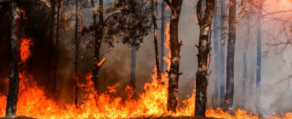 Sardegna distrutta dal rogo, dichiarato lo stato di calamità