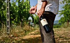 Enoturismo: scoprire l'Umbria e i suoi vini